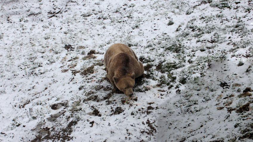 NAPA geniesst den Schnee