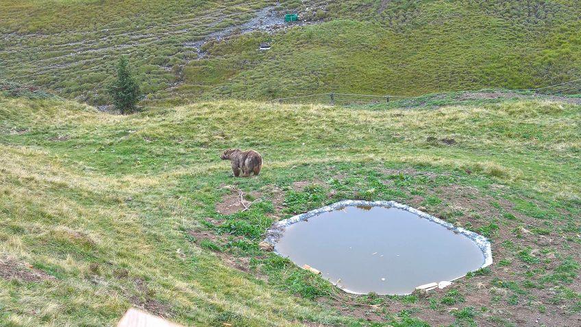 Napa fühlt sich wohl im Arosa Bärenland
